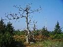 2009-09-18_09-50 cestou ze Suchého vrchu na Bradlo