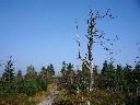 2009-09-18_09-52 Bradlo