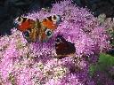 2009-09-19_12-30 Králíky